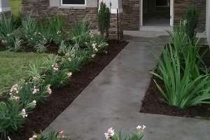 small landscaping front yard