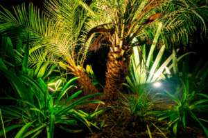 Landscape Lighting Jacksonville