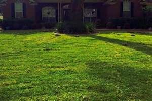 St Augustine Sod Grass